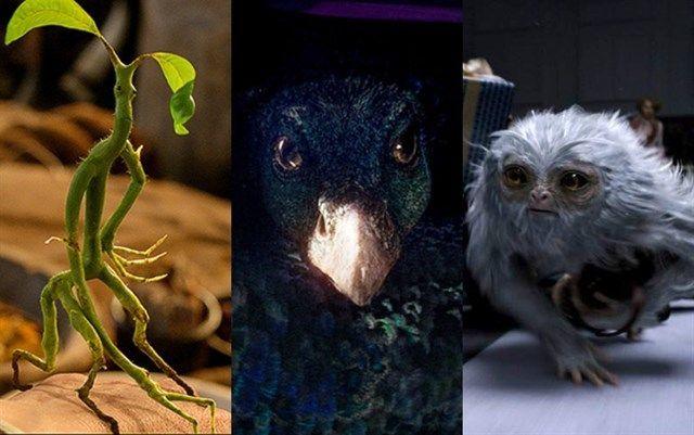 25444 - ¿Qué animal fantástico te encontrarás en esta aventura?