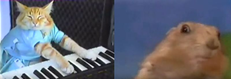 Gato pianista VS Dramatic Chipmunk
