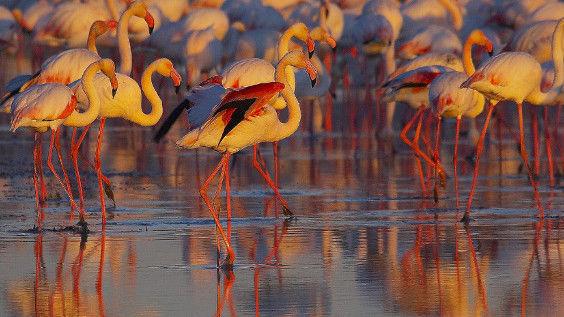 ¿Cuál de estos animales no es típico de la fauna de la provincia de cádiz?
