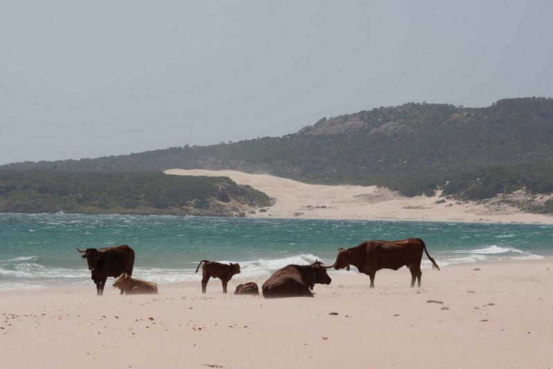 ¿En qué municipio gaditano podemos encontrarnos este curioso paisaje?