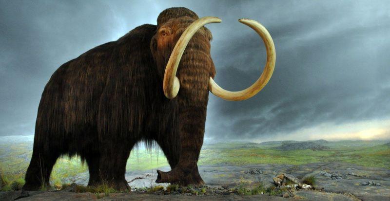 En 2050 ¿Se podrán clonar animales extintos? (cualquier animal extinto, incluyendo los dinosaurios)