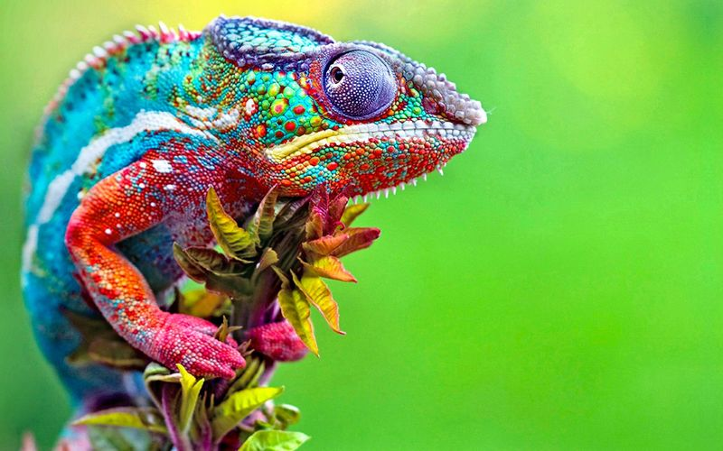 26965 - Curiosidades raras sobre animales