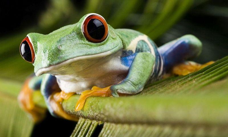 ¿Por donde respiran las ranas cuando están bajo el agua?