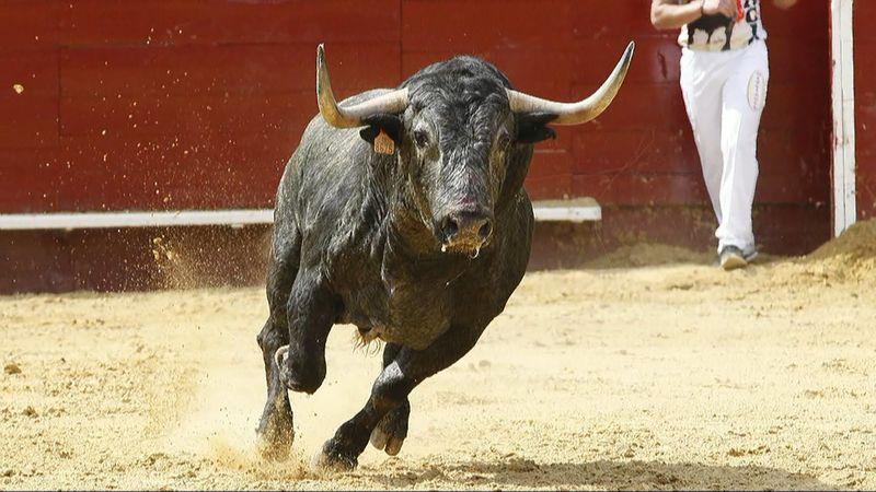 Los toros...