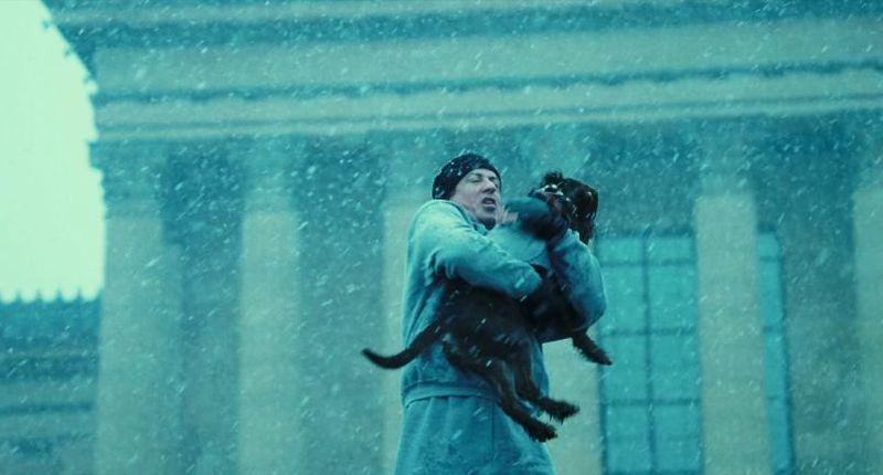 ¿Cómo se llama el perro que Rocky rescata de una perrera? (Rocky VI)
