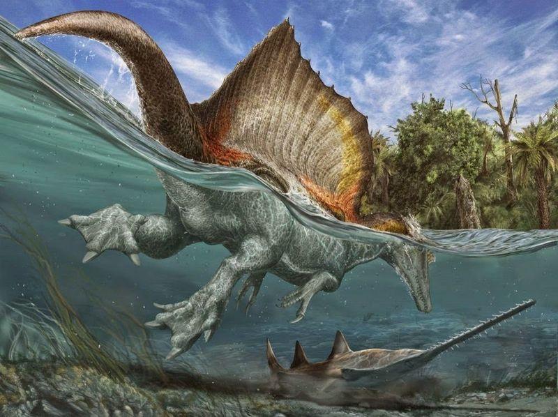 ¿Cuál es el dato correcto acerca del Spinosaurus?