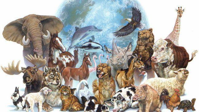 ¿De los siguientes tipos de animales cual prefieres?