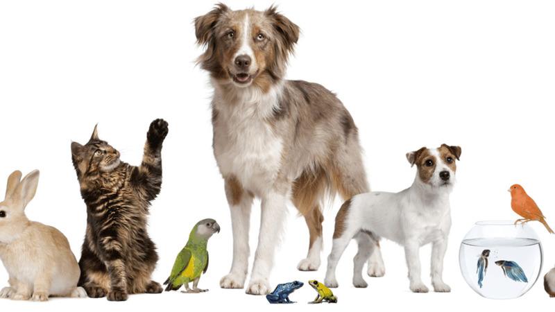 Mascotas.