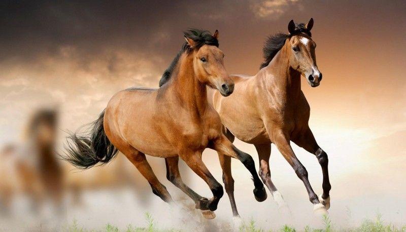 ¿Cuántos caballos venían de bonanza?