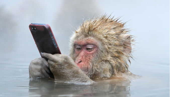 28560 - ¿Qué miembro de grupo de WhatsApp eres?