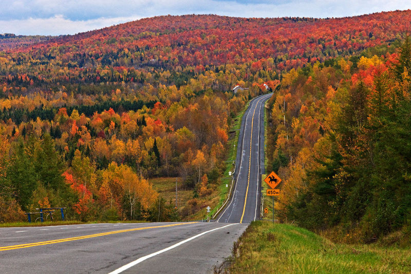 ¿Cuál es el país con más bosques de América?