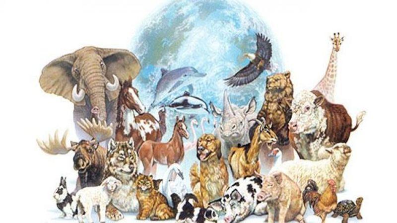 28863 - ¿Sabes distinguir a un animal de otro?