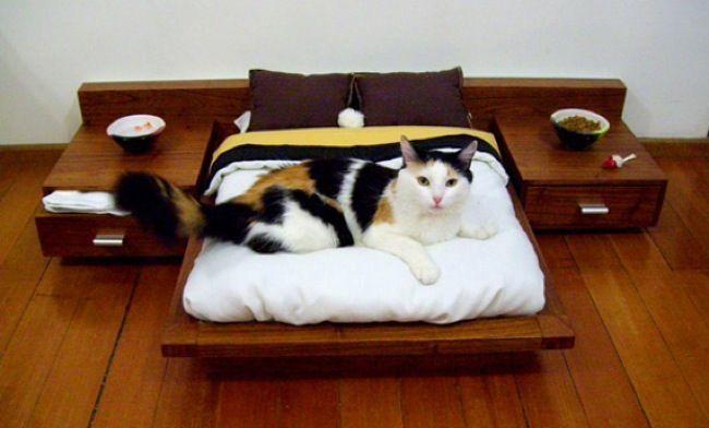 El humano ha conseguido cogerte y te ha llevado a una especie de lugar cómodo y blandito: tu cama.