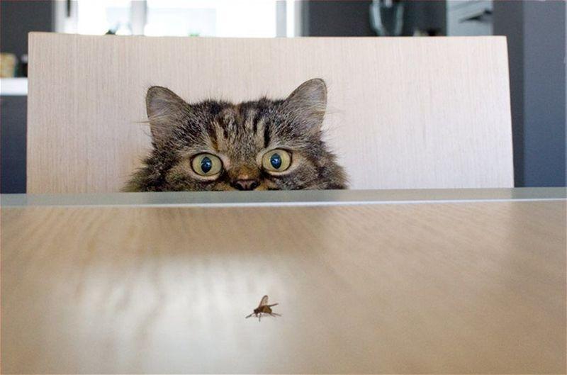 Encuentras tu primera presa: una mosca