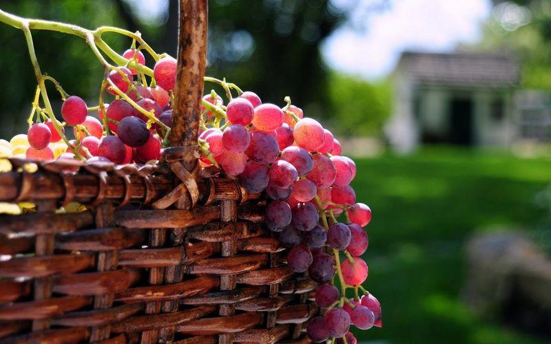 Las uvas explotan en el microondas