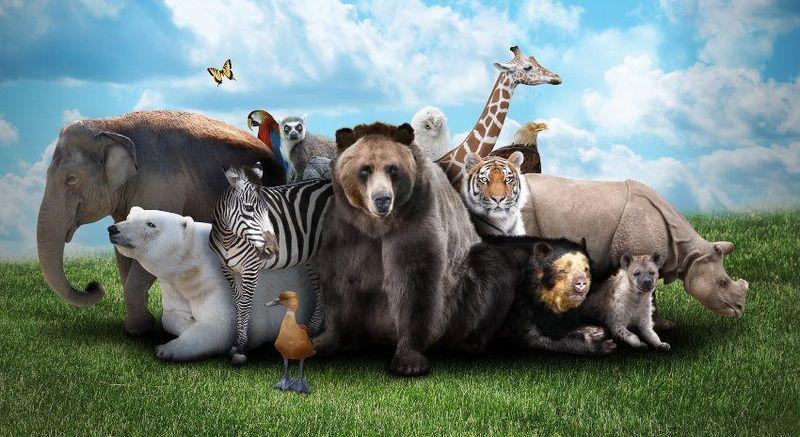 Empezamos, ¿qué animal te gusta más?