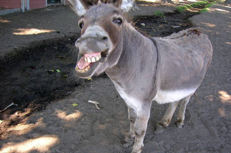 29296 - Test del burro