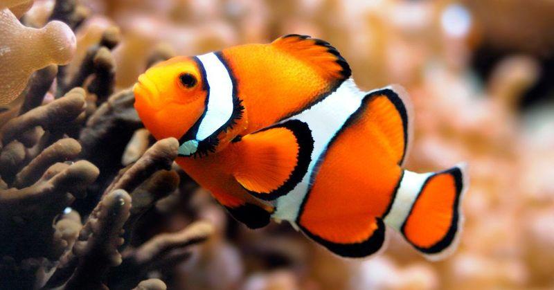 ¿En que lugar hay más pescados?
