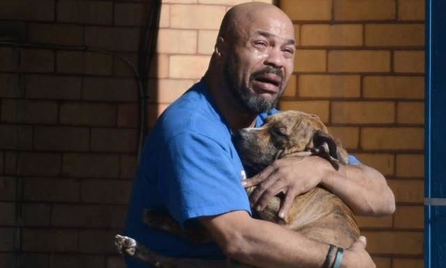 Encargas a un familia que cuide de tu mascota mientras estas de vacaciones, cuando llegas se le ha escapado y la ha perdido