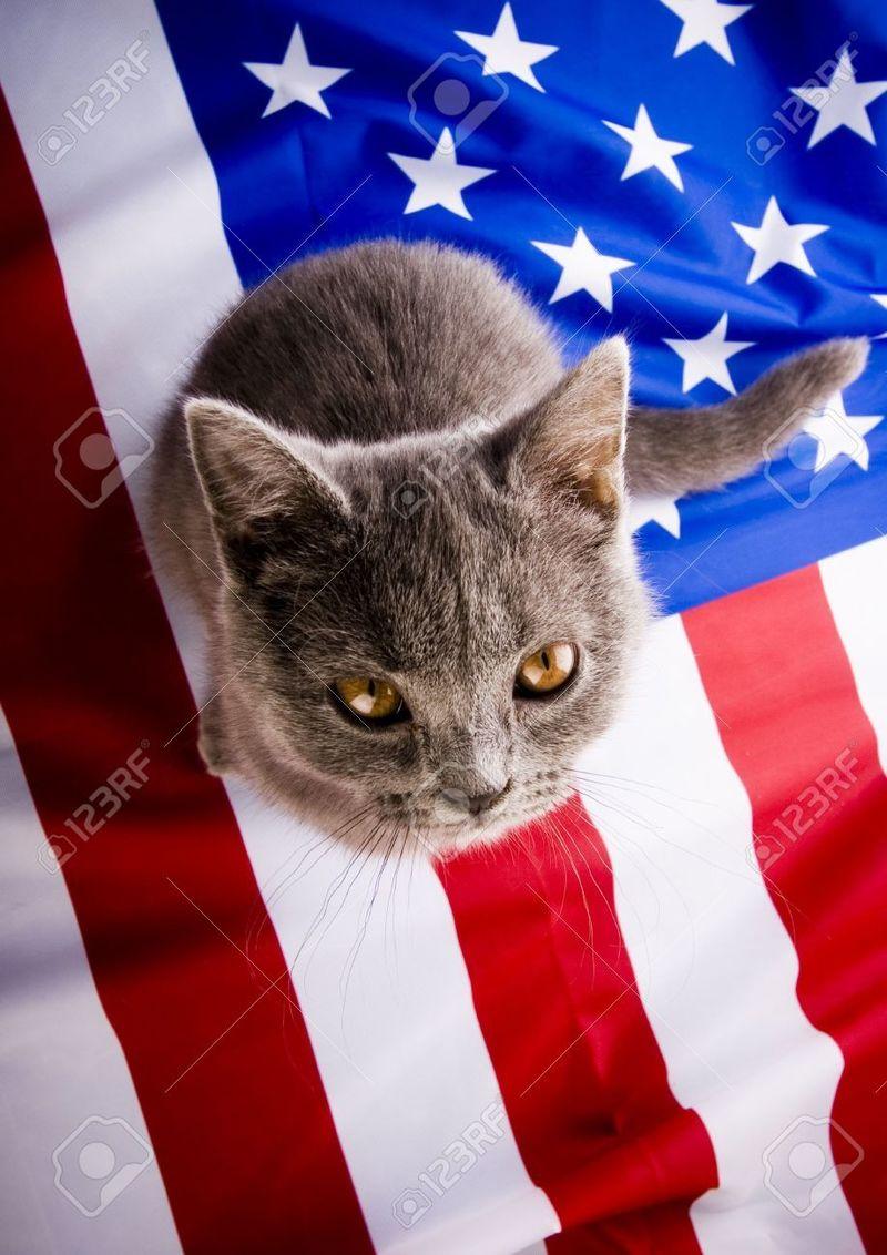 29433 - ¿Qué líder de país fue tu mascota en su vida anterior?