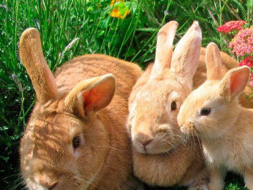 ¿Con qué animales se lleva mal?