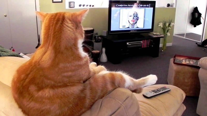 Mira la Tv