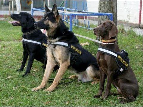 ¿Te gustaría que en tu trabajo como ayudante de agente te acompañasen animales?