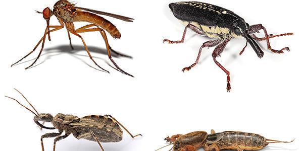 ¿Cuántas especies de insectos existen aproximadamente hasta el 2017?
