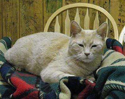 Stubbs, un famoso gato, logró ser alcalde de un pueblo del estado de: