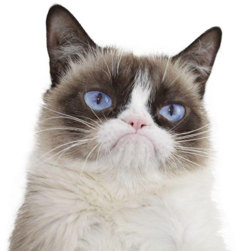 29758 - ¿Qué estudiaría tu gato si fuese universitario?