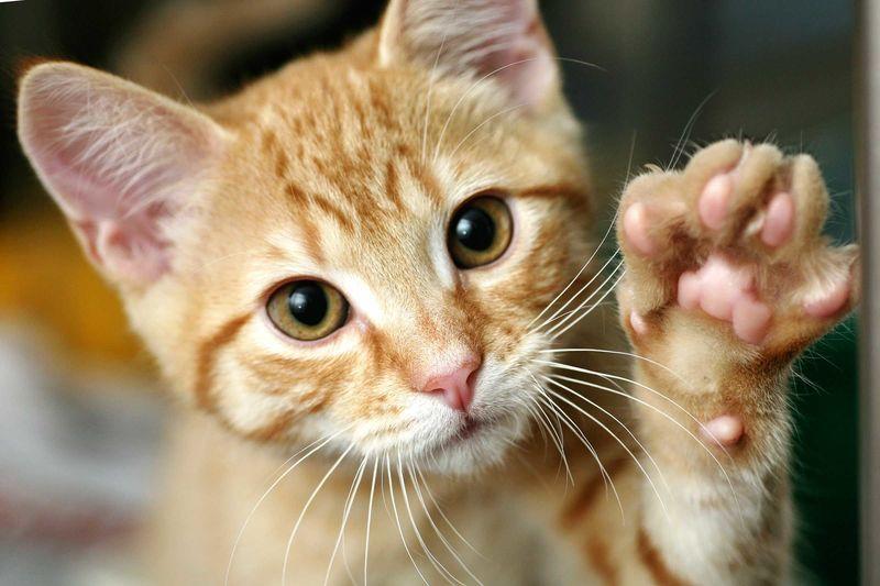 ¿Qué hace tu gato en los ratos libres?