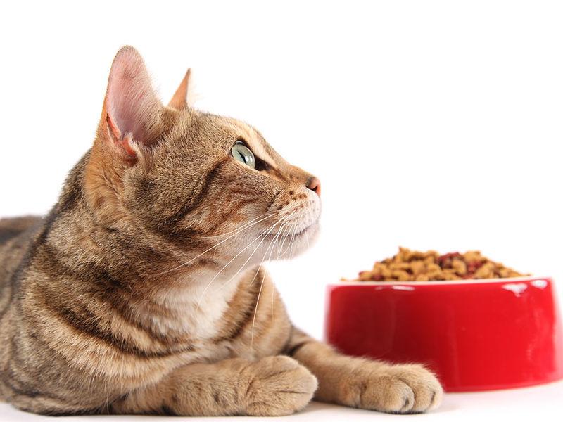 ¿Cuál es la comida favorita de tu gato?