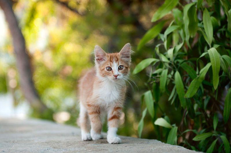 ¿Cómo es el carácter de tu gato?