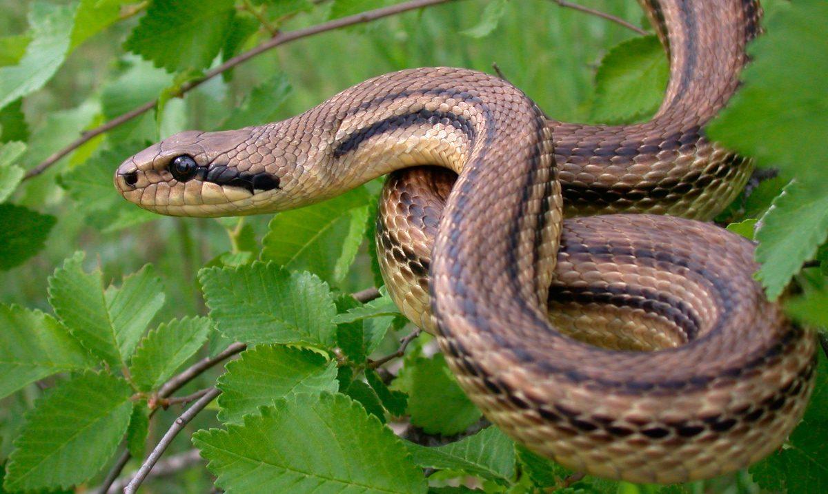 ¿Como llamas a una serpiente que mide 3'141595 metros?