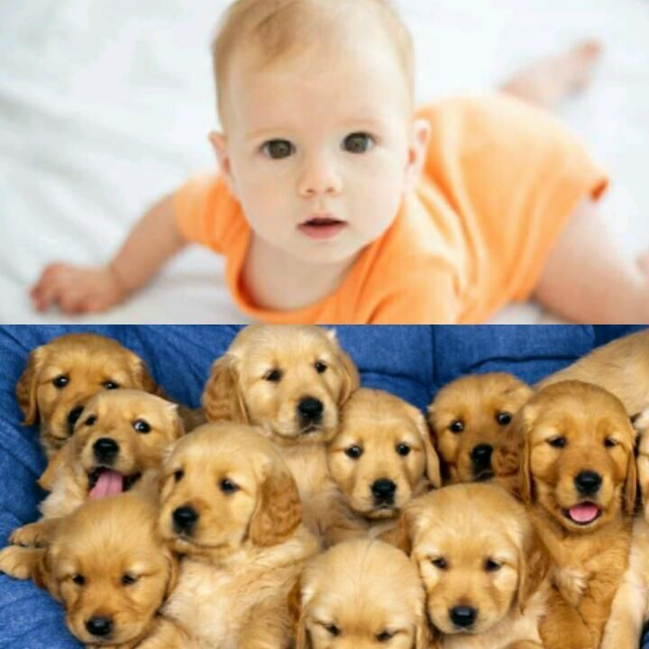 Matar a un bebe humano o a cincuenta cachorros de perro