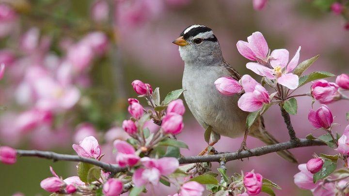 Si en un árbol hay 5 pájaros y un cazador al disparar mata a uno, ¿cuántos pájaros quedan en el árbol?