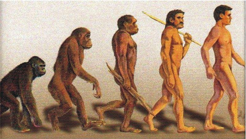 Según Darwin el hombre viene del mono pero ¿de dónde viene el mono?