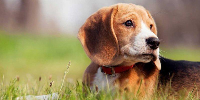 ¿Cúanto ADN comparte la raza humana con la raza canina?