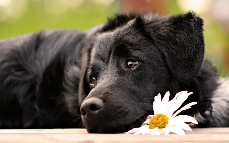 ¿Qué parte del cuerpo del perro es el equivalente a nuestra huella dactilar?
