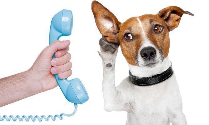 ¿Cuántas palabras puede aprender un perro?