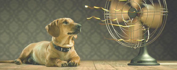 ¿Cuál es el sistema natural de perro para mantener su sangre fresca en días de calor?