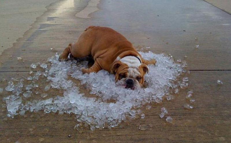 ¿Por dónde sudan los perros?