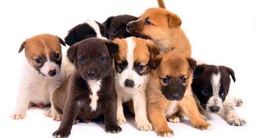 ¿A cuántos años humanos equivalen los dos primeros años de vida de un perro?