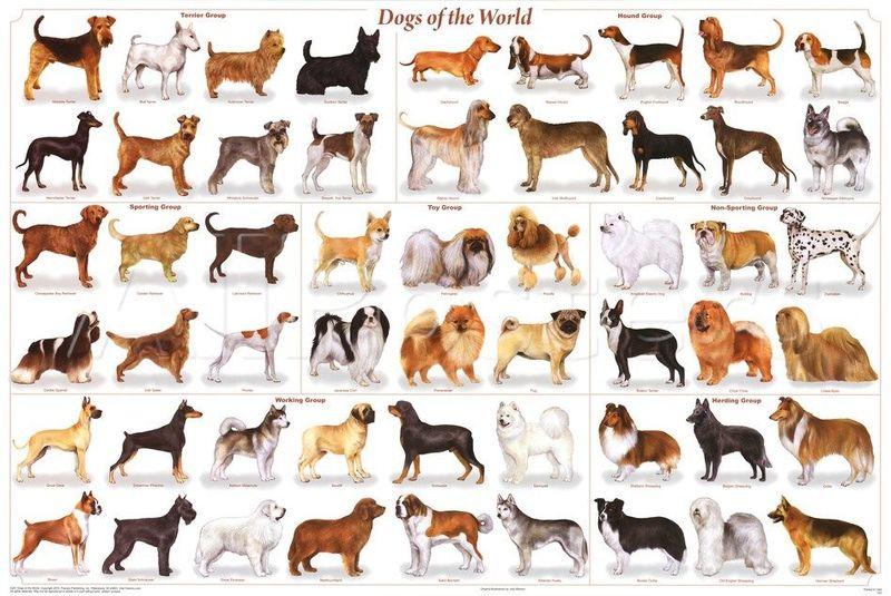 ¿Cuántas razas de perros hay en el mundo?