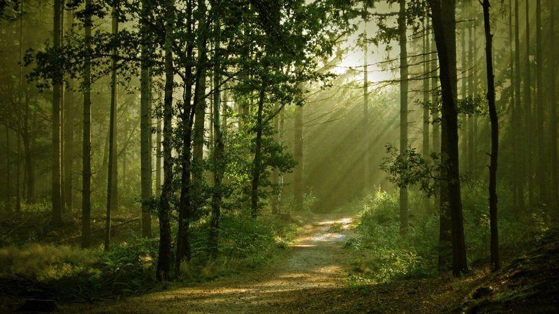 Caminas por el bosque y encuentras un animal herido, por lo que tu sabes, de muerte. ¿Qué haces?