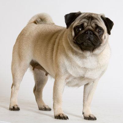 Este perro te sonará si viste la película Men In Black