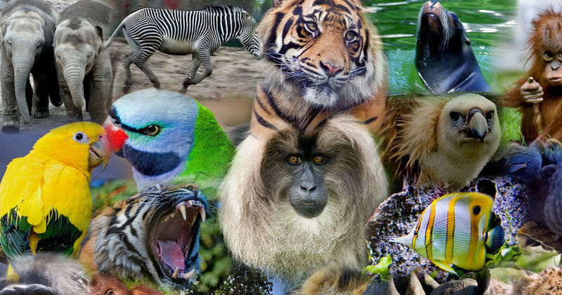 ¿Cuál es tu animal favorito?