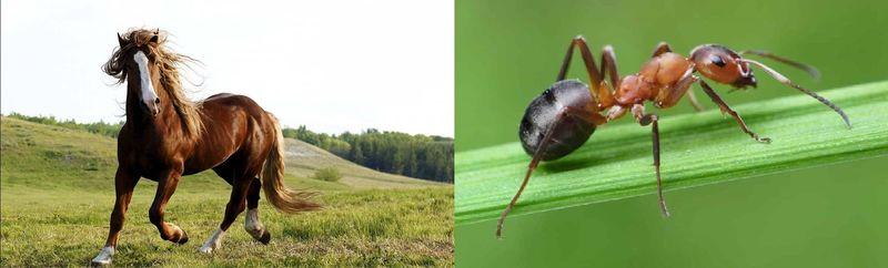 ¿Quién es más mortal, el caballo o la hormiga?