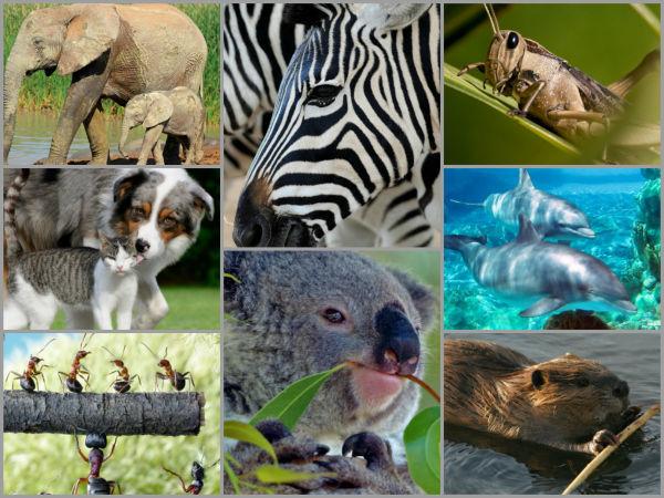 32789 - ¿Sabrías reconocer estos animales por su nombre en latín?
