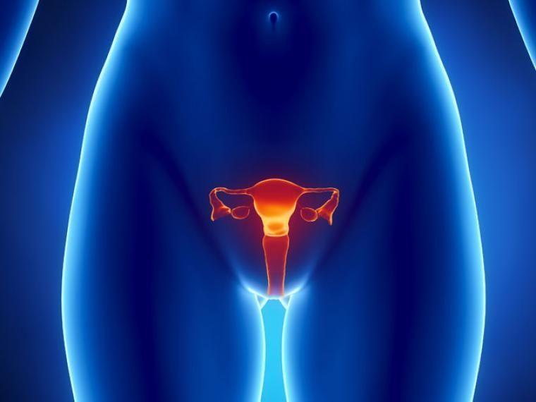 Hablaba de que las mujeres tenían envidia de pene y los hombres deseo de útero.
